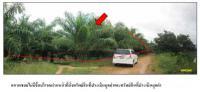 ที่ดินพร้อมสิ่งปลูกสร้างหลุดจำนอง ธ.ธนาคารกรุงไทย สงขลา รัตภูมิ กำแพงเพชร